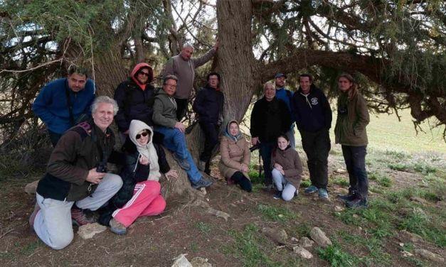 Comienzan en Caravaca las jornadas de conservación del Cernícalo Primilla