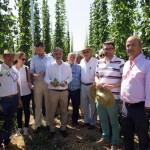 El cultivo de lúpulo en Caravaca ofrece buenos resultados y se perfila como una alternativa rentable para la agricultura de la zona