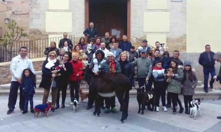 Acto en Albudeite de bendición de los animales por San Antón