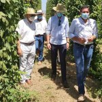 El éxito de los ensayos experimentales de cultivo de lúpulo permite iniciar la producción a gran escala en la comarca del Noroeste