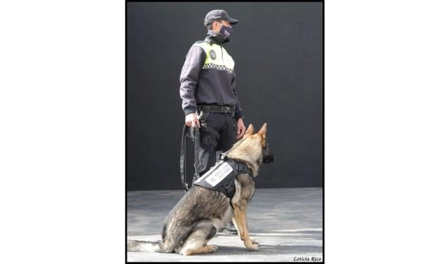 Julio Cardozo: «Tener a Vúcker en la Policía Local de Calasparra nos va a dar un abanico de posibilidades que no tendríamos sin el can»