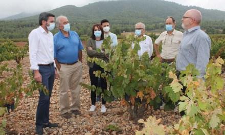 Ayuntamiento y Comunidad Autónoma conocen in situ los daños que las fuertes lluvias han causado en viñedos de la DOP Bullas