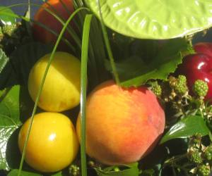 naranja fruta