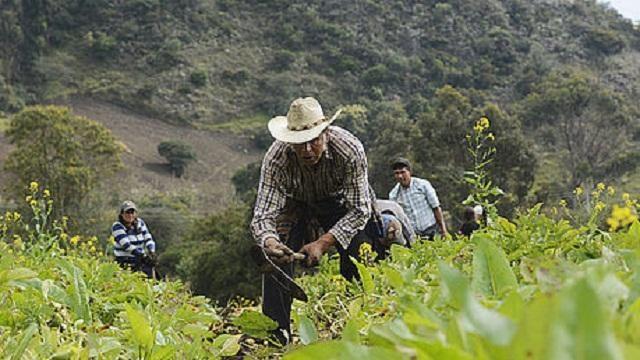 Beneficios para productores del campo que se encuentren en mora con el Banco Agrario