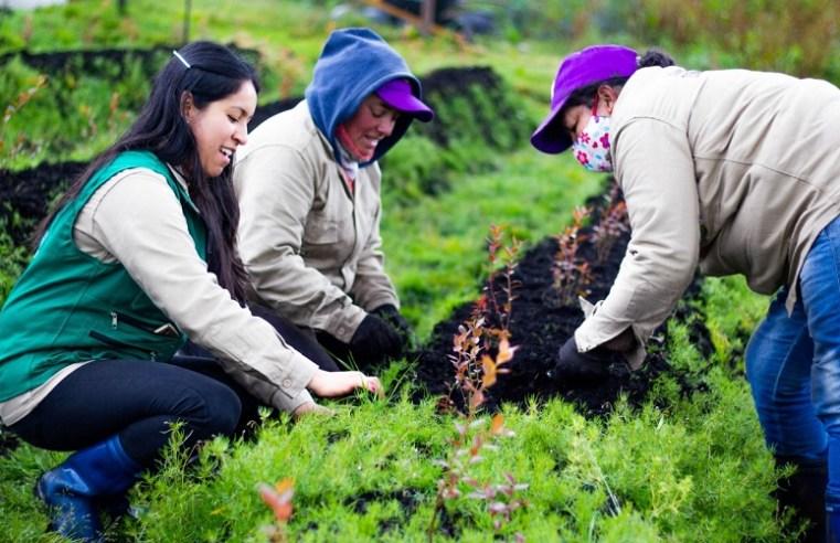 Convocatoria para el emprendimiento femenino en el sector rural