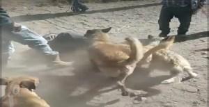 Perros atacan a presunto delincuente en La Valla