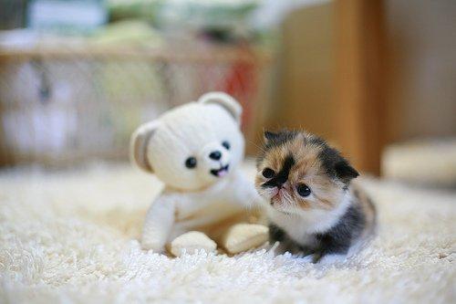 gato graciosos pequeño