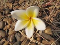 Voila ses petites fleurs...