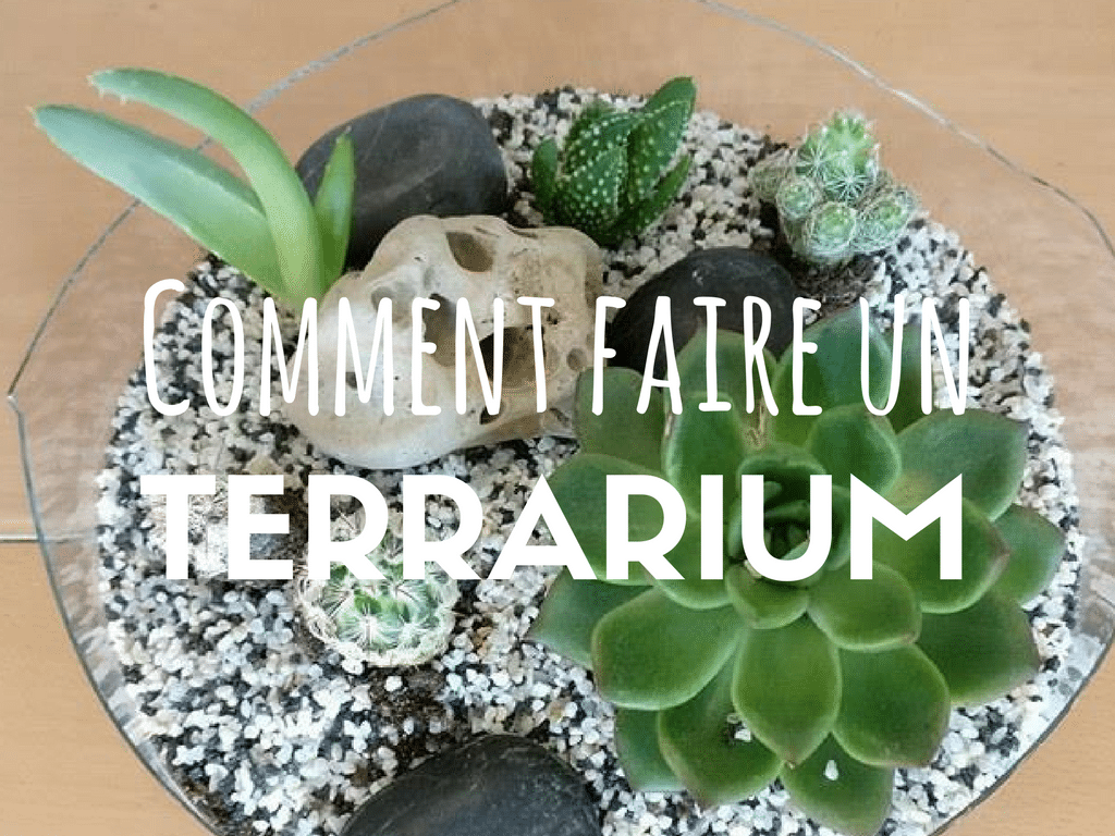 comment faire un terrarium ouvert eloge de la curiosit. Black Bedroom Furniture Sets. Home Design Ideas