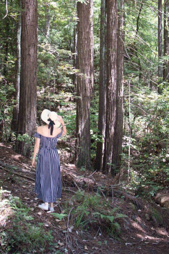muir woods california san francisco
