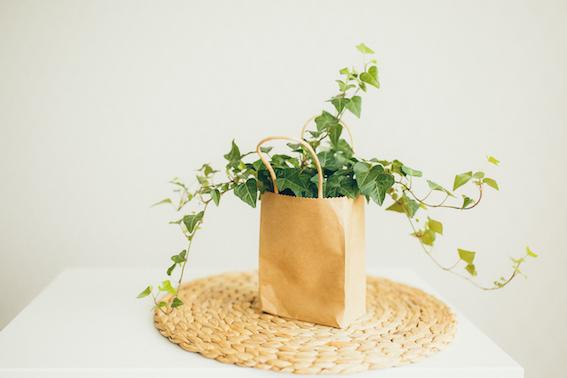 La recette de la lessive au lierre maison ! Un DIY facile, écologique, zéro-déchet et économique ! #zérodéchet #zerodechet #lessive #recette #lierre #maison #faitmaison #écologique #naturel #nontoxique #santé