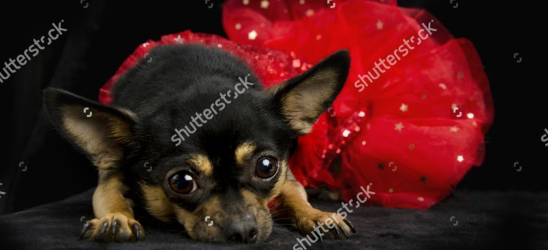 Some new pet stock images