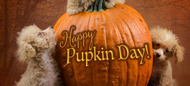 Happy Pupkin Day!
