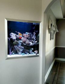 Exotic Wall Mounted Aquarium Giving Better Mood Everyday Part 39