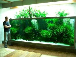 Exotic Wall Mounted Aquarium Giving Better Mood Everyday Part 52