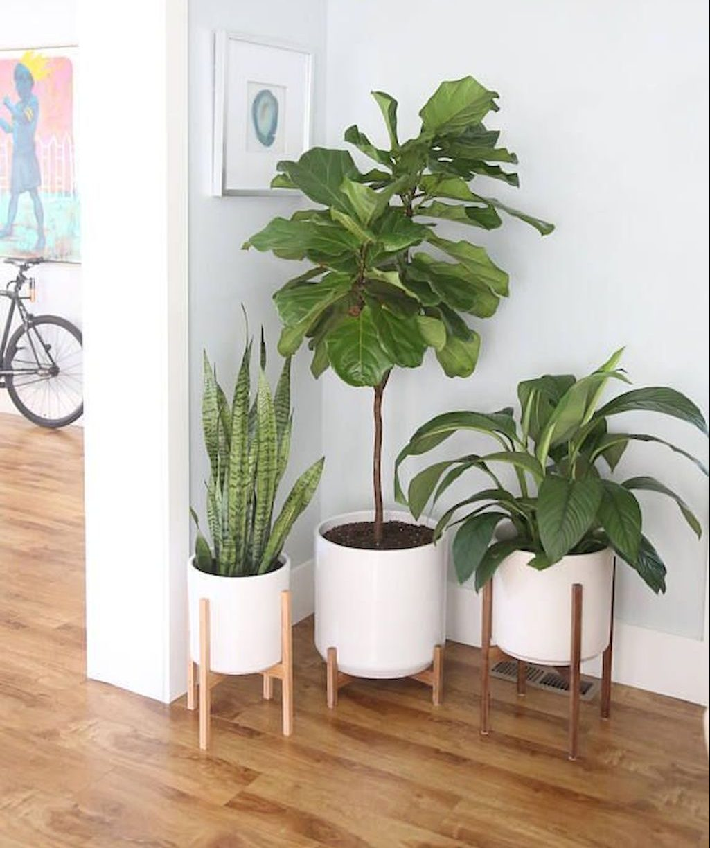 lively living room vibe with indoor plant decoration part