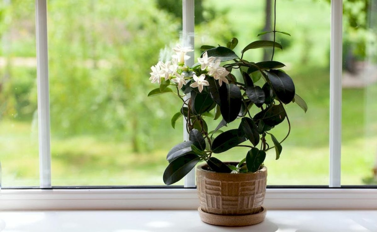 Bedroom Jasmine Plant Decoration
