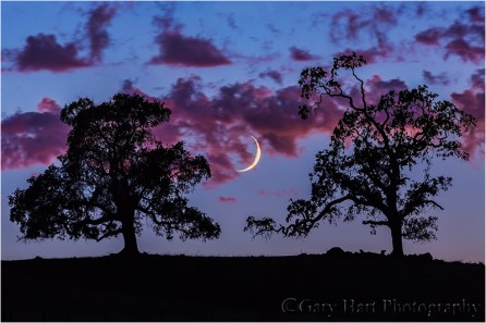 Crescent Moon and Oaks at Dusk, Sierra Foothills, California Canon EOS-1Ds Mark III 1.6 seconds F/11.0 ISO 400 330 mm
