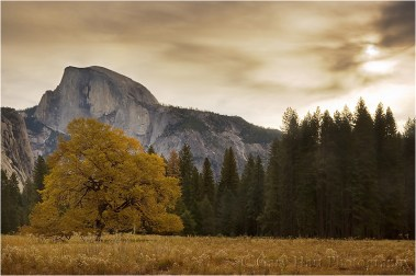 Autumn Morning, Cook's Meadow, Yosemite