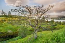 Gary Hart Photography: Spring Rainbow, Catherine Creek Trail, Columbia River Gorge