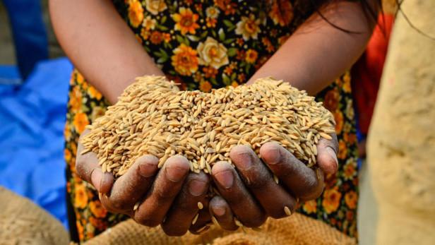 La apuesta del milenio: erradicar el hambre en el mundo