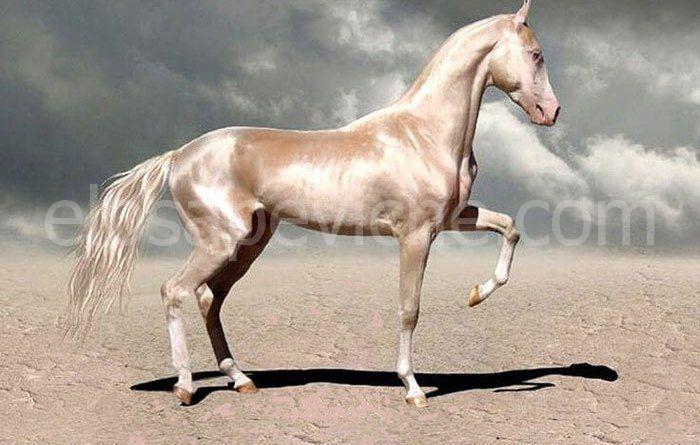 """Questo raro animale è definito """"Il cavallo più bello del mondo"""""""