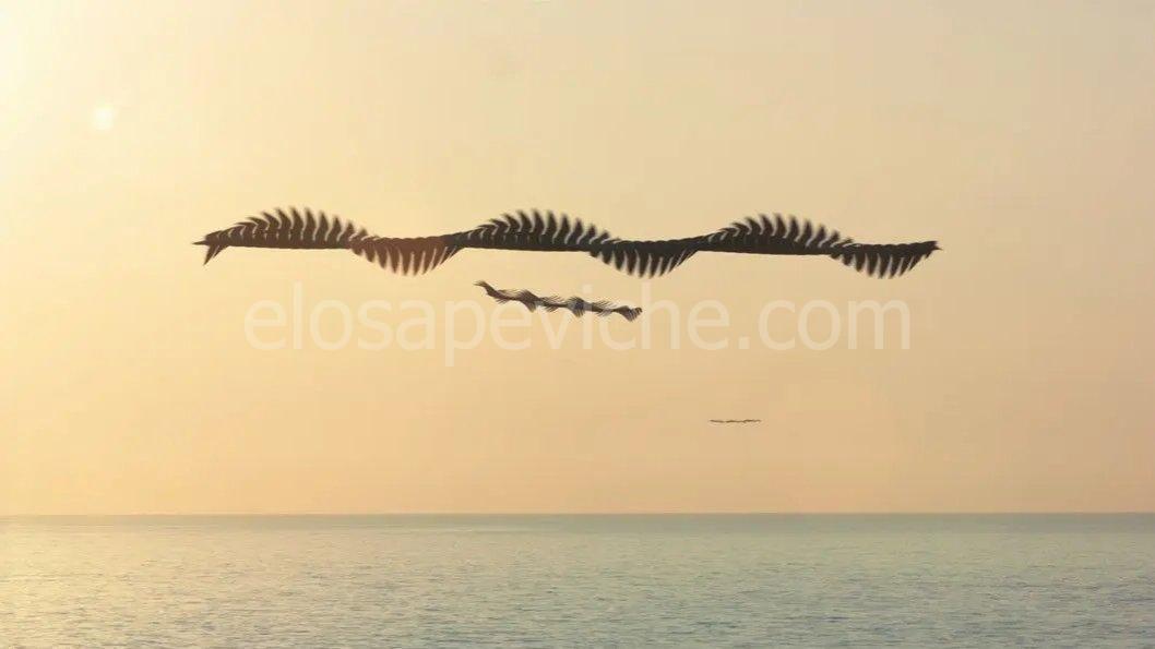 Incredibili cronofotografie catturano la traiettoria degli uccelli in volo