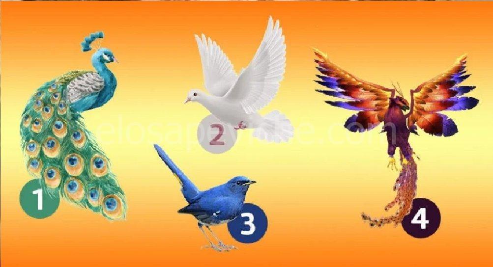 Scegli un uccello e scopri quali novità ci saranno nella tua vita.