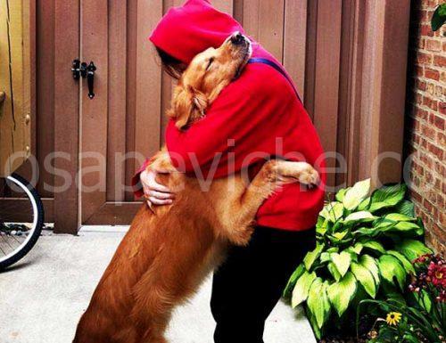 Chi ha un cane nella sua vita ha il dono più grande che possa desiderare
