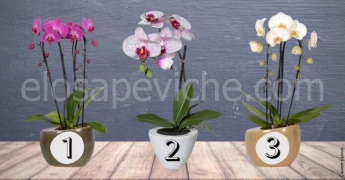 Scegli un'orchidea e scopri cosa aspettarti questa settimana