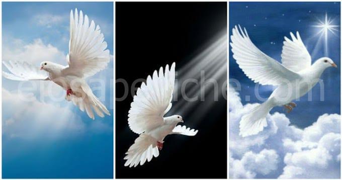 Scegli una colomba e ricevi un bellissimo messaggio