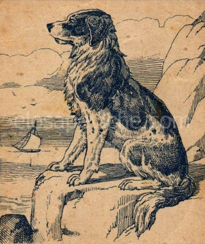 Test: l'immagine mostra un cane, ma non tutti possono vedere il suo proprietario. Riesci a trovarlo?
