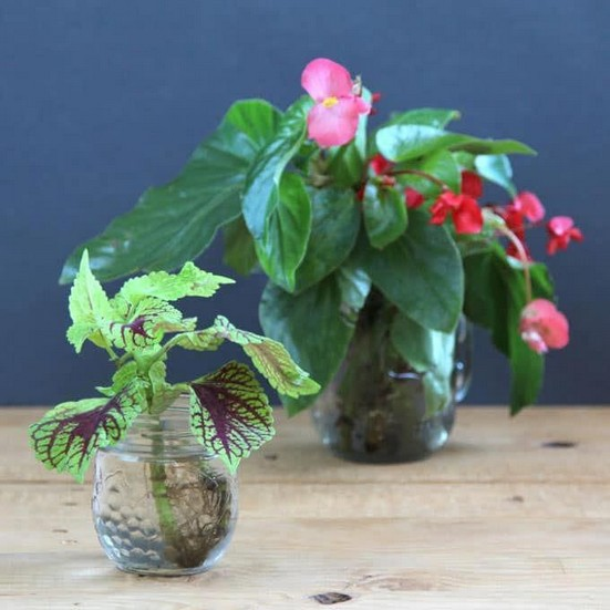 13 Beautiful Plants In Jars Garden You're Going To Fall In Love 07