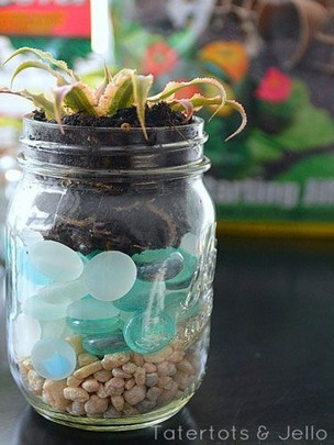 13 Beautiful Plants In Jars Garden You're Going To Fall In Love 11