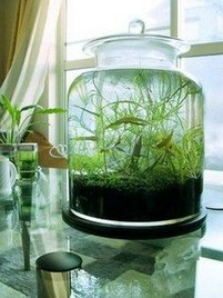 15 Brilliant And Creative DIY Nano Pond Garden Combination 18