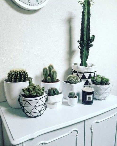 16 Creative And Beautiful Cactus Room Decor 04