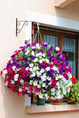 18 Charming Examples How To Arrange Hanging Flowers For Your Yard 12