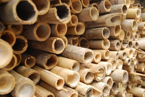 Cañas de bambú en Tai O