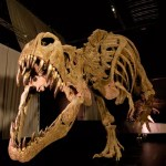 Fotos Dinópolis Teruel, T-rex Museo Paleontológico