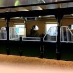 Fotos Heineken Experience Amsterdam, caballos