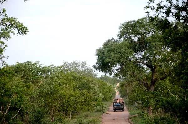 Fotos Parque Kruger Sudáfrica, de safari