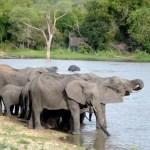 Fotos Parque Kruger Sudáfrica, elefantes