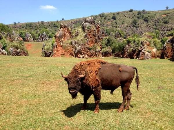 Fotos Parque de Cabárceno en Cantabria, bisonte