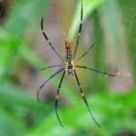 Fotos de Doi Inthanon en Tailandia, araña