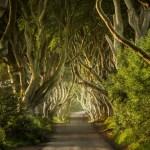 Fotos de Irlanda del Norte, Dark Hedges el Camino Real de Juego de Tronos