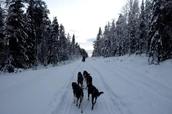 Fotos de Laponia Finlandesa, trineo de perros
