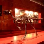 Fotos de Legendark Territorio Dinopolis Galve, esqueleto