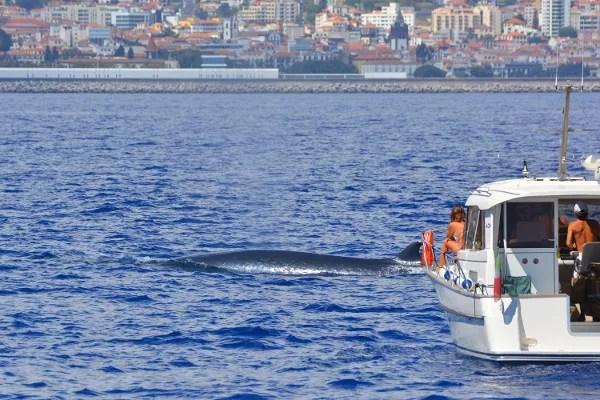 Fotos de Madeira, avistamiento de ballenas