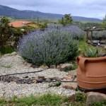 Fotos de Romangordo en Caceres, huerto de la Casa de los Aromas