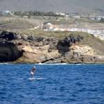 Fotos de Tenerife, paddle surf